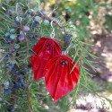 Bijou origami rouge